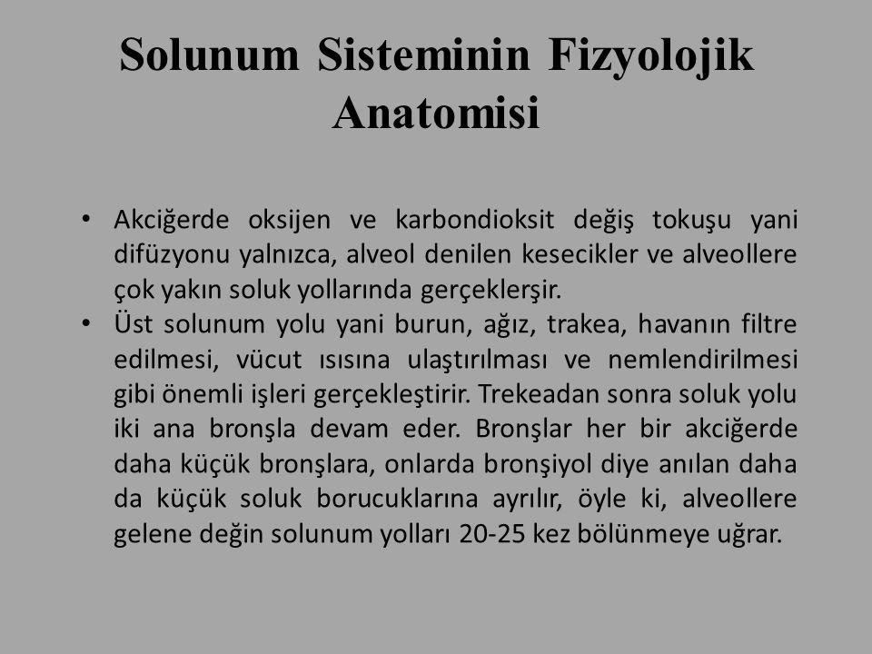 Solunum Sisteminin Fizyolojik Anatomisi