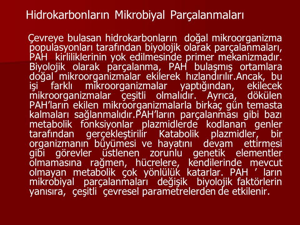 Hidrokarbonların Mikrobiyal Parçalanmaları