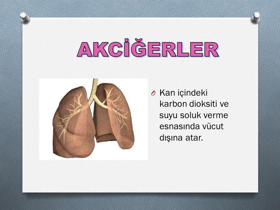 Kan içindeki karbon dioksiti ve suyu soluk verme esnasında vücut dışına atar.