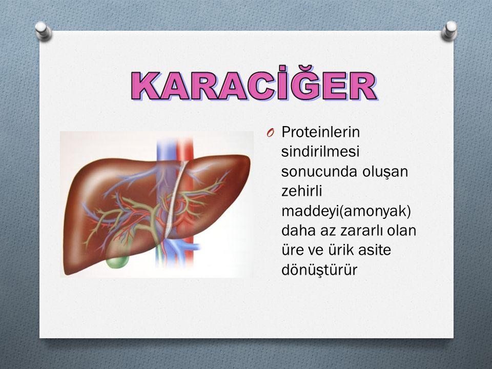Proteinlerin sindirilmesi sonucunda oluşan zehirli maddeyi(amonyak) daha az zararlı olan üre ve ürik asite dönüştürür