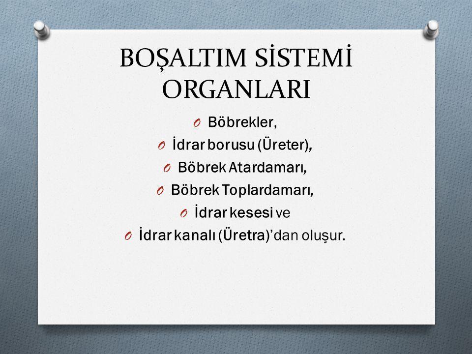 BOŞALTIM SİSTEMİ ORGANLARI