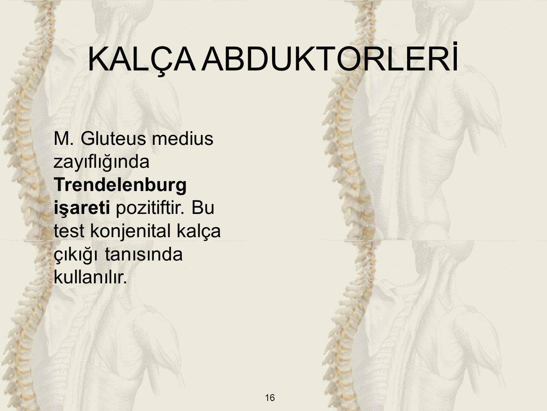 KALÇA ABDUKTORLERİ M. Gluteus medius zayıflığında Trendelenburg işareti pozitiftir.