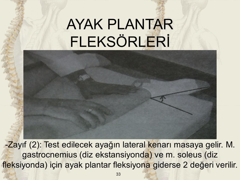 AYAK PLANTAR FLEKSÖRLERİ