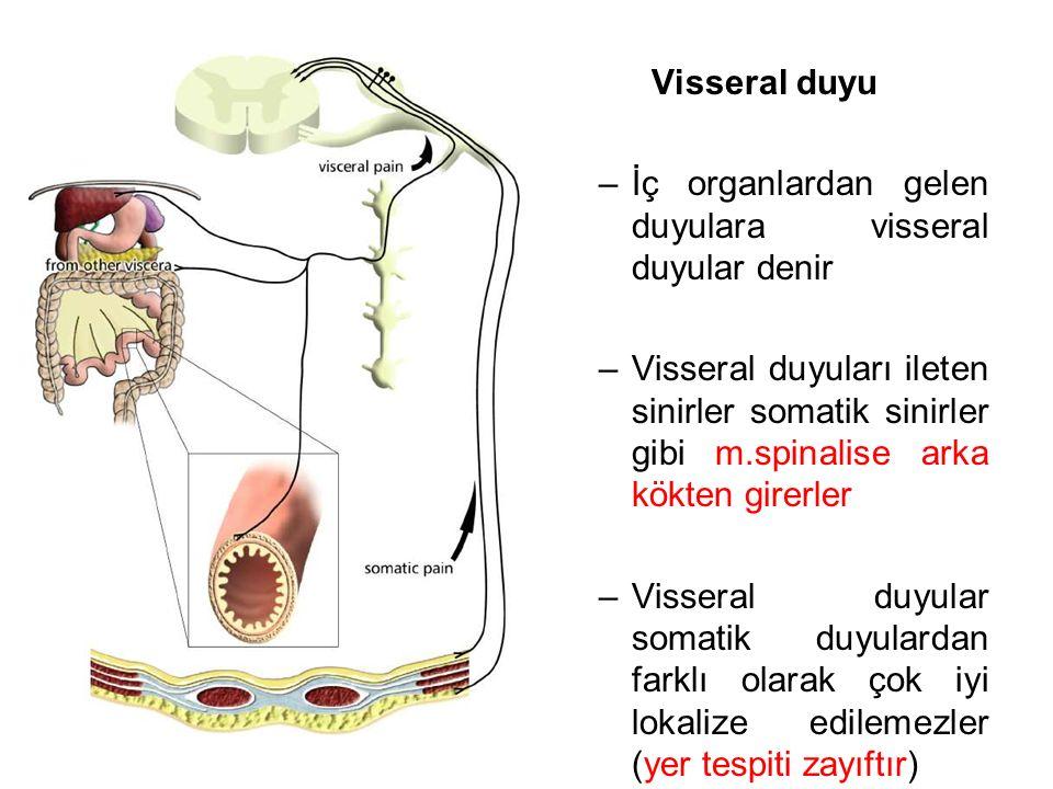 Visseral duyu İç organlardan gelen duyulara visseral duyular denir.