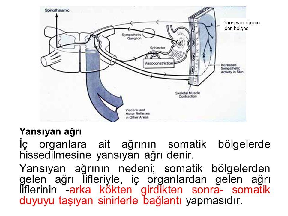 Yansıyan ağrının deri bölgesi. Yansıyan ağrı. İç organlara ait ağrının somatik bölgelerde hissedilmesine yansıyan ağrı denir.