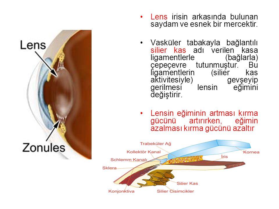 Lens irisin arkasında bulunan saydam ve esnek bir mercektir.