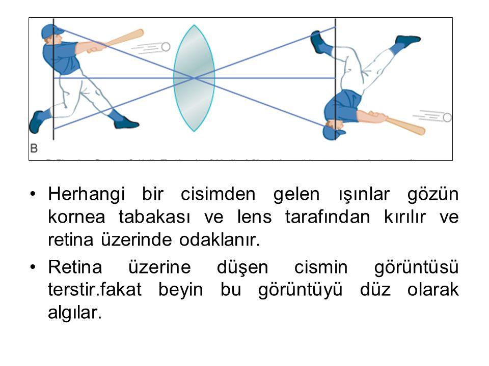 Herhangi bir cisimden gelen ışınlar gözün kornea tabakası ve lens tarafından kırılır ve retina üzerinde odaklanır.
