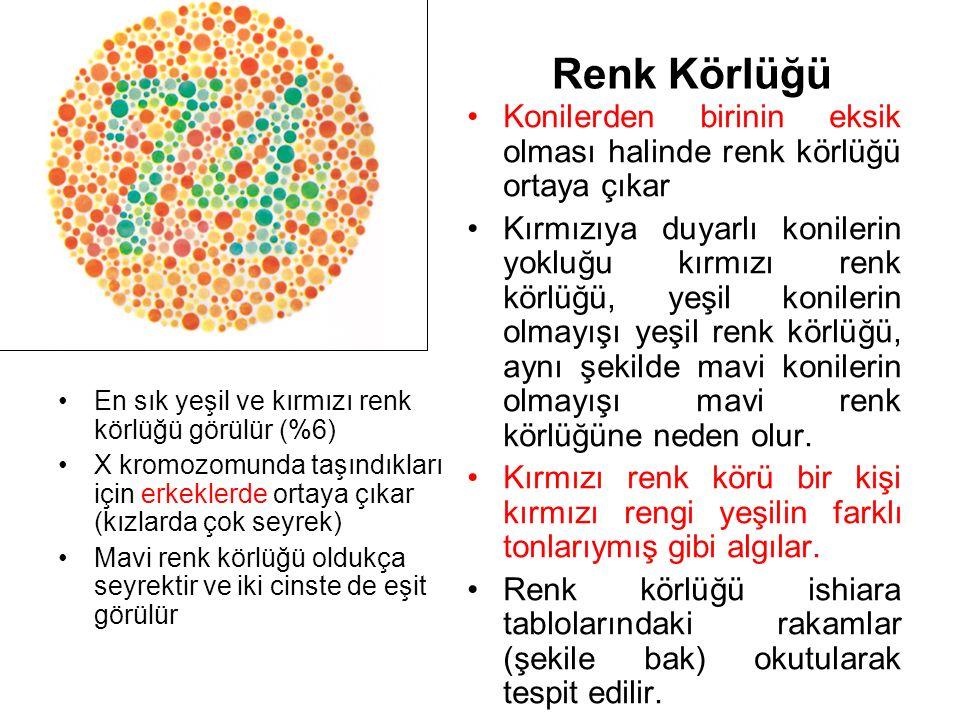 Renk Körlüğü Konilerden birinin eksik olması halinde renk körlüğü ortaya çıkar.