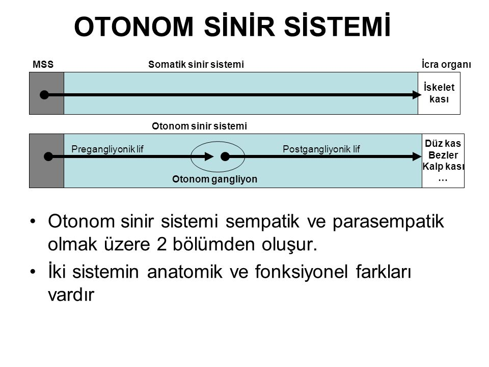 OTONOM SİNİR SİSTEMİ MSS. Somatik sinir sistemi. İcra organı. İskelet. kası. Otonom sinir sistemi.