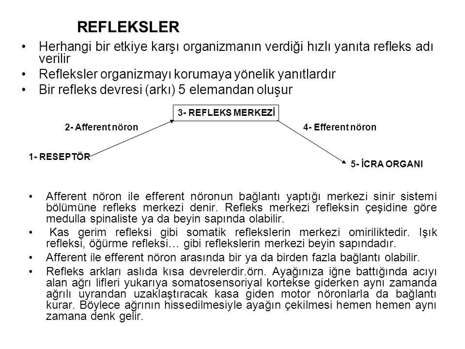 REFLEKSLER Herhangi bir etkiye karşı organizmanın verdiği hızlı yanıta refleks adı verilir. Refleksler organizmayı korumaya yönelik yanıtlardır.