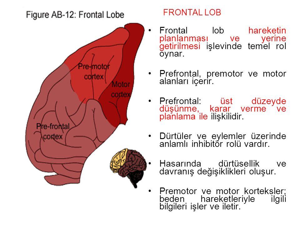 Prefrontal, premotor ve motor alanları içerir.