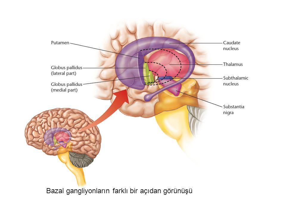 Bazal gangliyonların farklı bir açıdan görünüşü