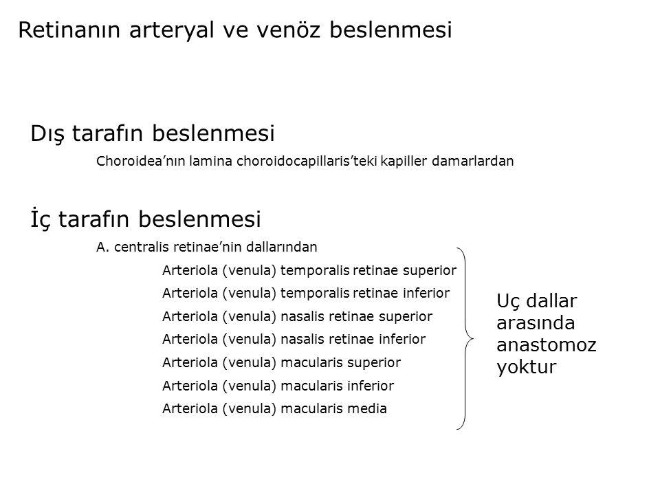 Retinanın arteryal ve venöz beslenmesi