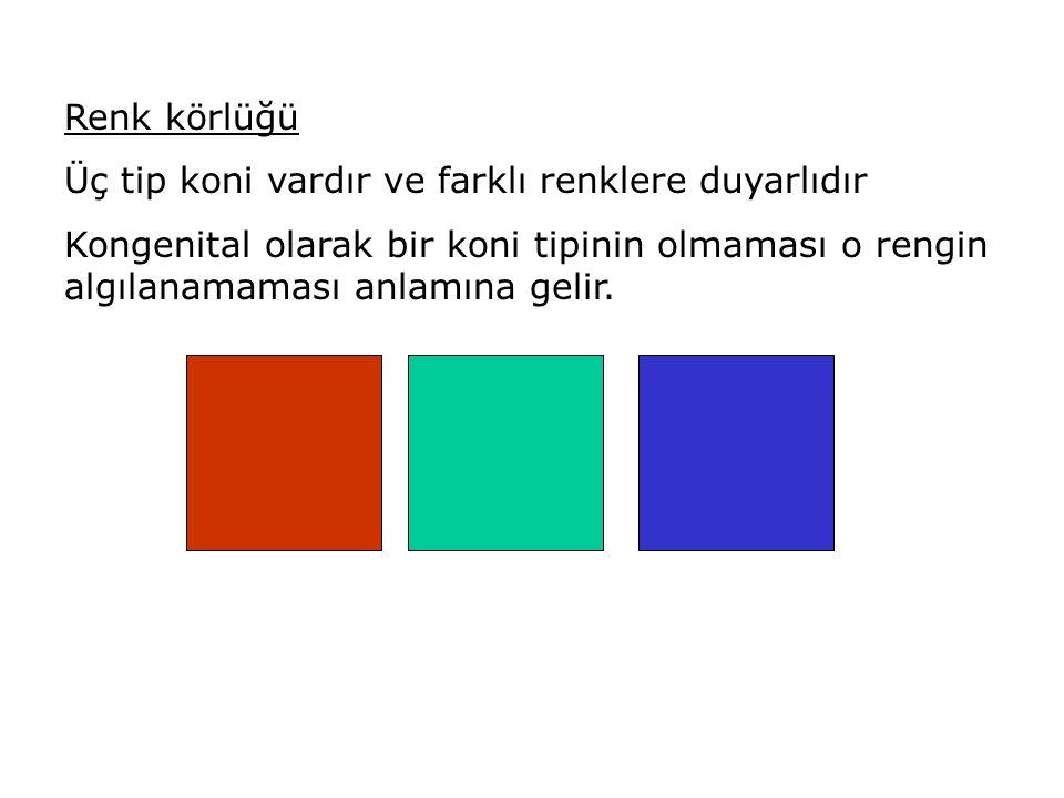 Renk körlüğü Üç tip koni vardır ve farklı renklere duyarlıdır.
