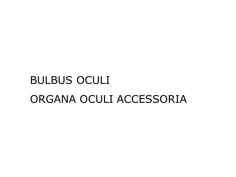 BULBUS OCULI ORGANA OCULI ACCESSORIA