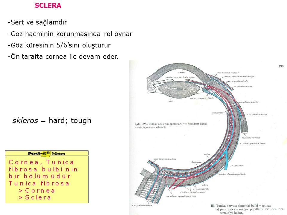 skleros = hard; tough SCLERA -Sert ve sağlamdır