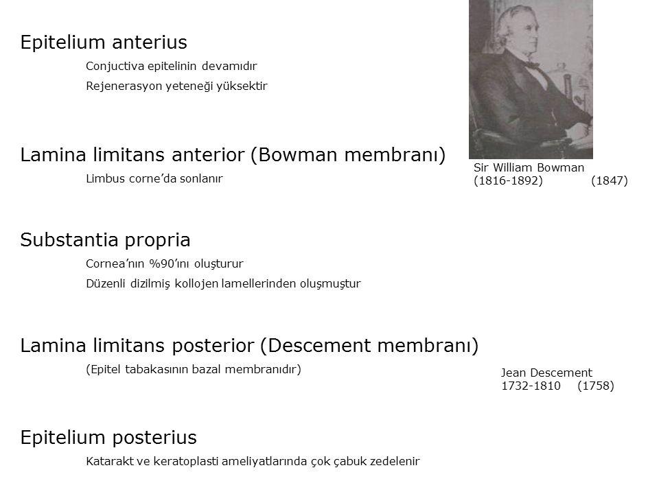 Lamina limitans anterior (Bowman membranı)