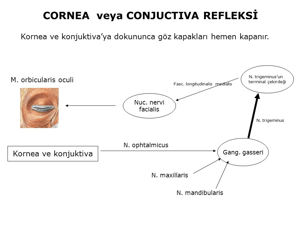 CORNEA veya CONJUCTIVA REFLEKSİ