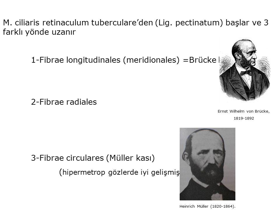 Ernst Wilhelm von Brücke,