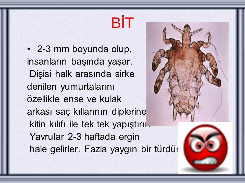 BİT 2-3 mm boyunda olup, insanların başında yaşar.