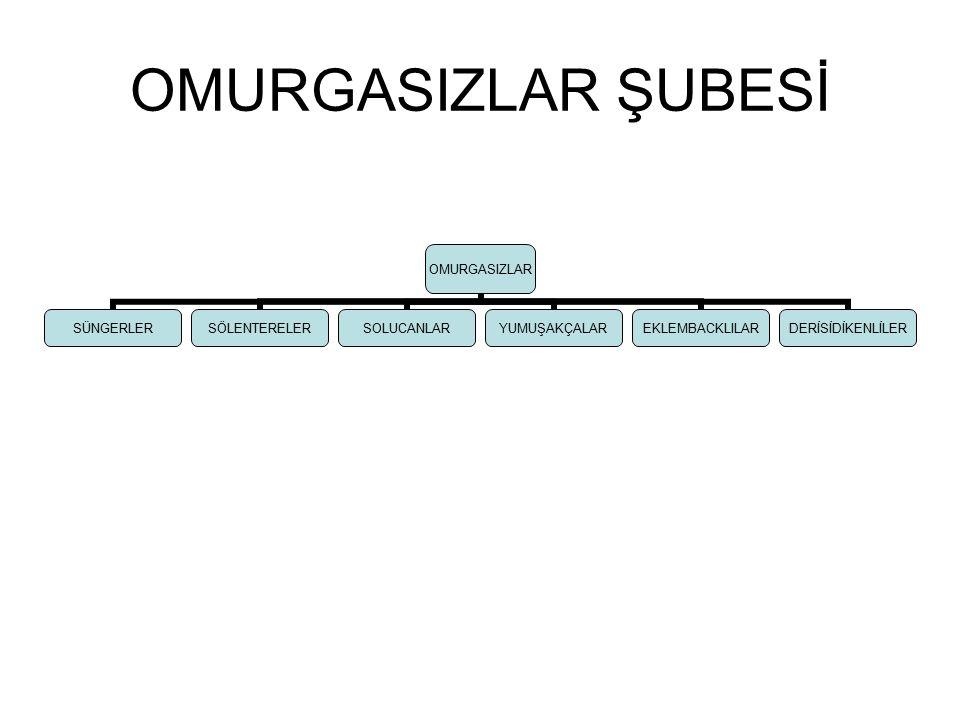 OMURGASIZLAR ŞUBESİ