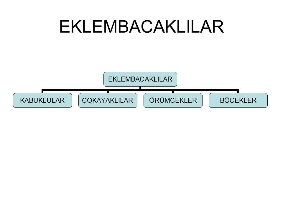 EKLEMBACAKLILAR