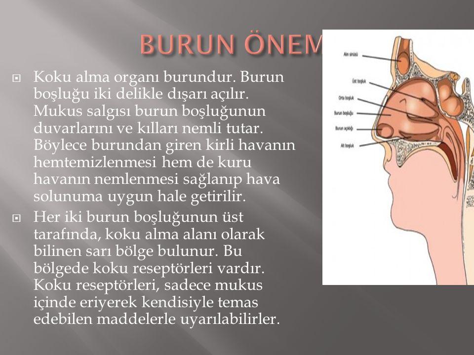 BURUN ÖNEMİ