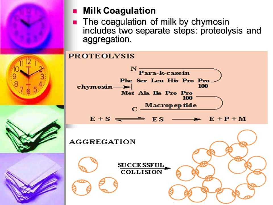 Milk Coagulation The coagulation of milk by chymosin includes two separate steps: proteolysis and aggregation.