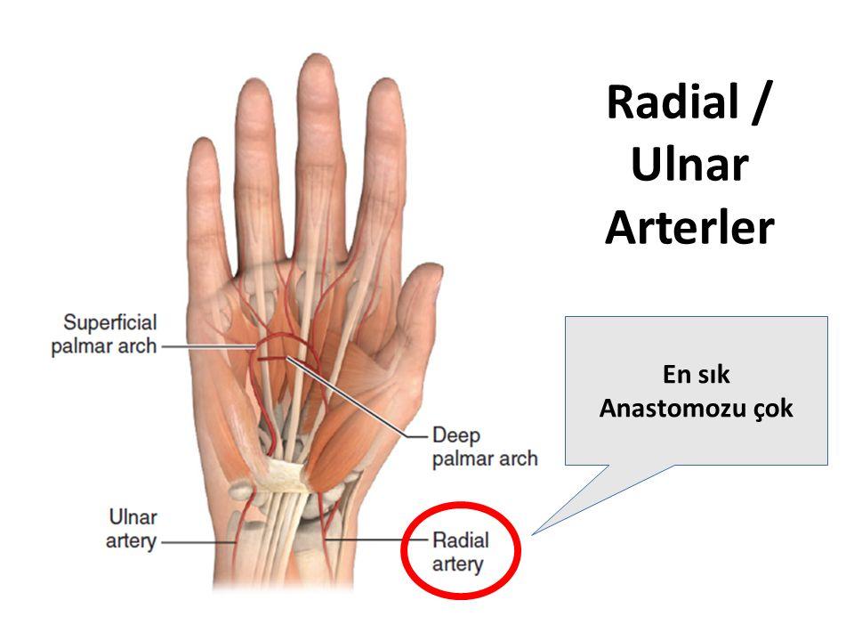 Radial / Ulnar Arterler