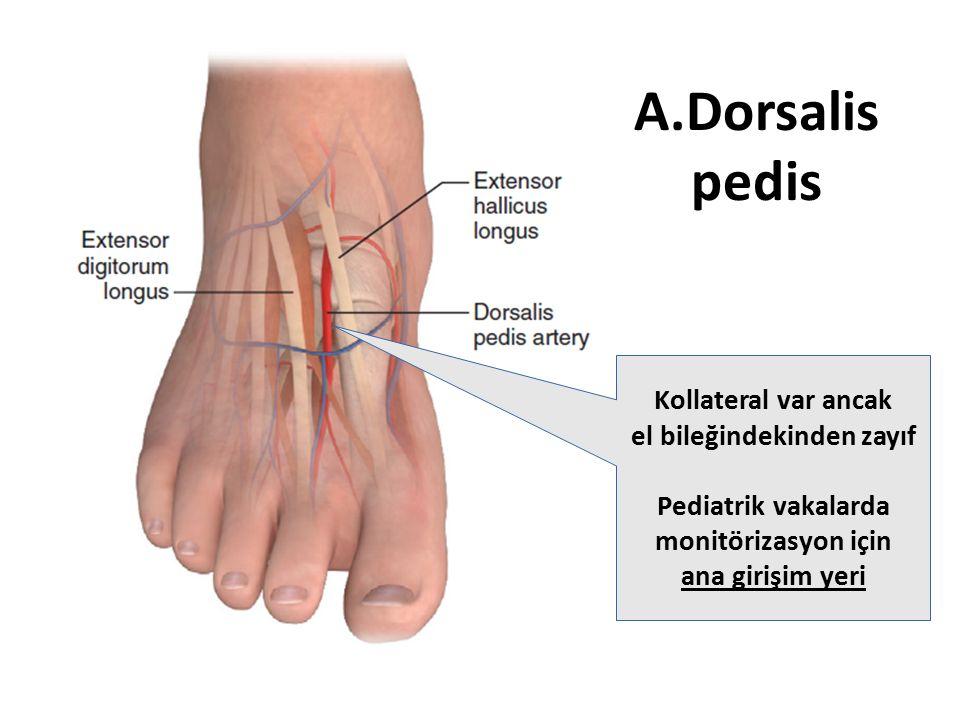 A.Dorsalis pedis Kollateral var ancak el bileğindekinden zayıf
