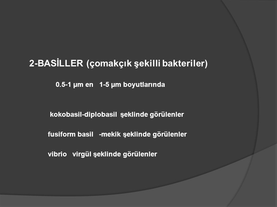 2-BASİLLER (çomakçık şekilli bakteriler)