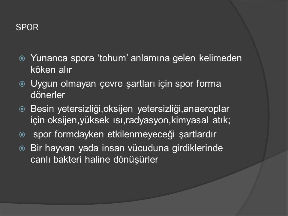 SPOR Yunanca spora 'tohum' anlamına gelen kelimeden köken alır. Uygun olmayan çevre şartları için spor forma dönerler.