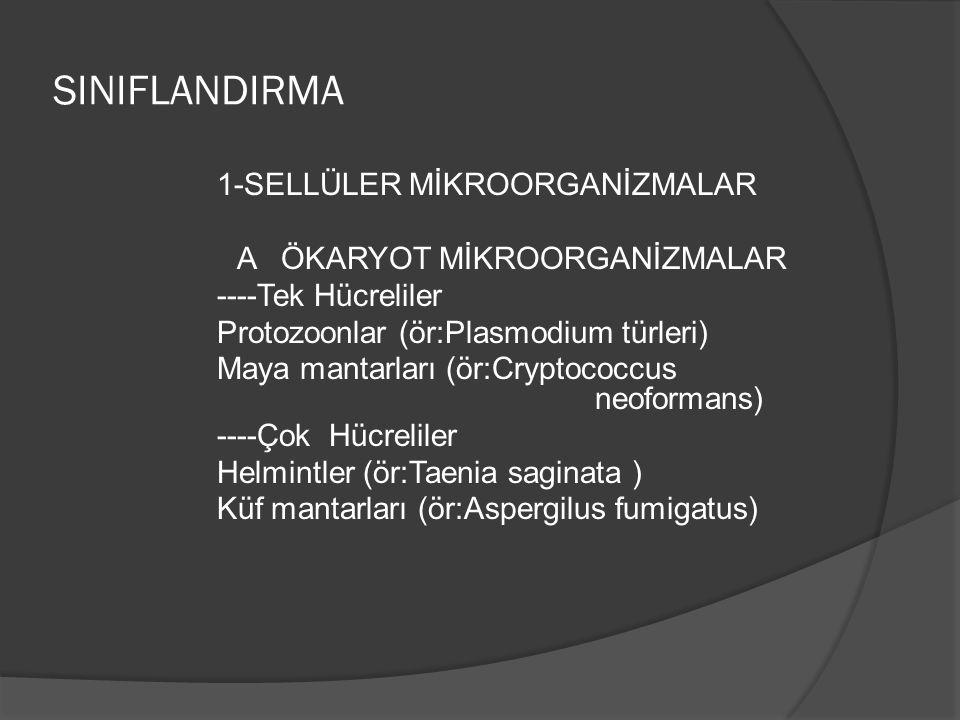 SINIFLANDIRMA