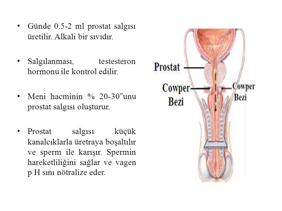 Günde 0.5-2 ml prostat salgısı üretilir. Alkali bir sıvıdır.