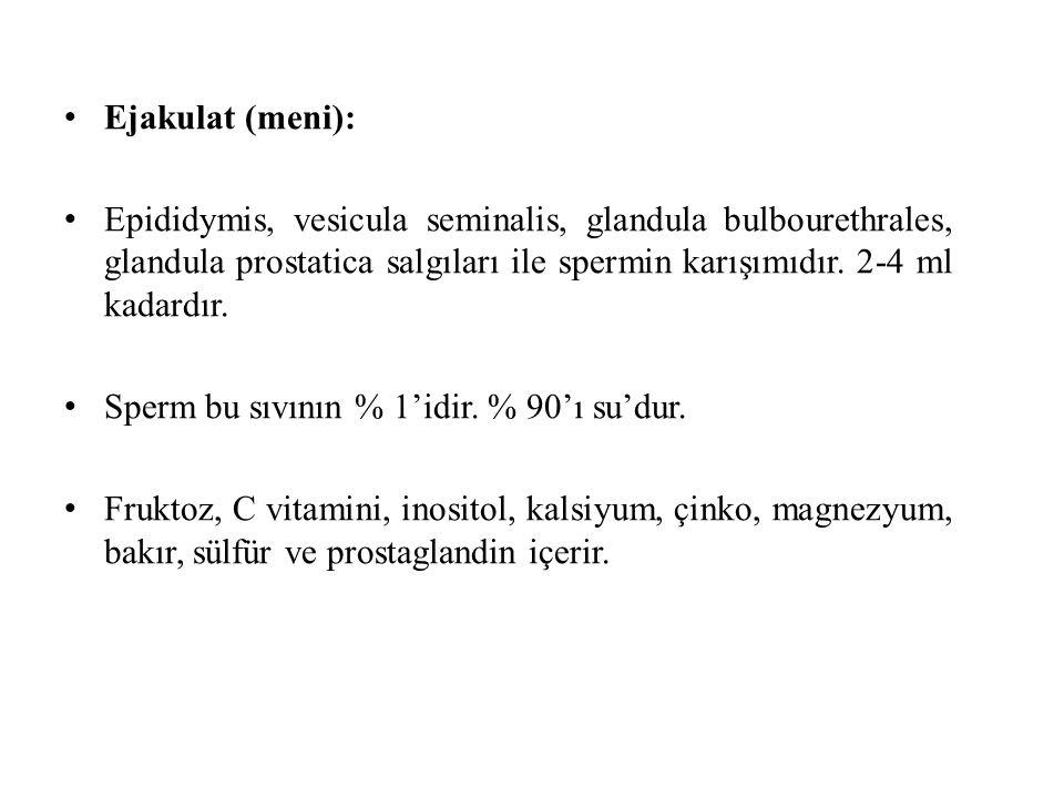 Ejakulat (meni): Epididymis, vesicula seminalis, glandula bulbourethrales, glandula prostatica salgıları ile spermin karışımıdır. 2-4 ml kadardır.