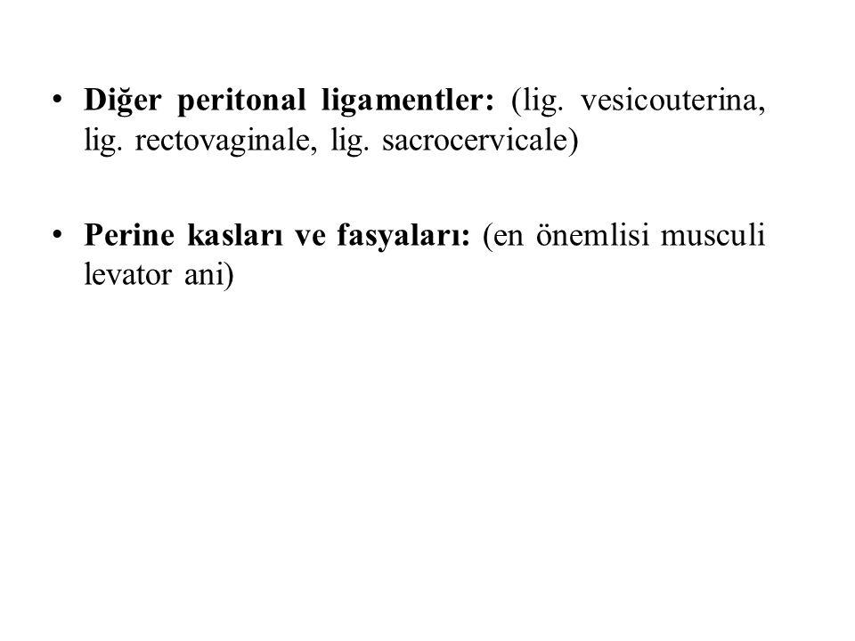Diğer peritonal ligamentler: (lig. vesicouterina, lig