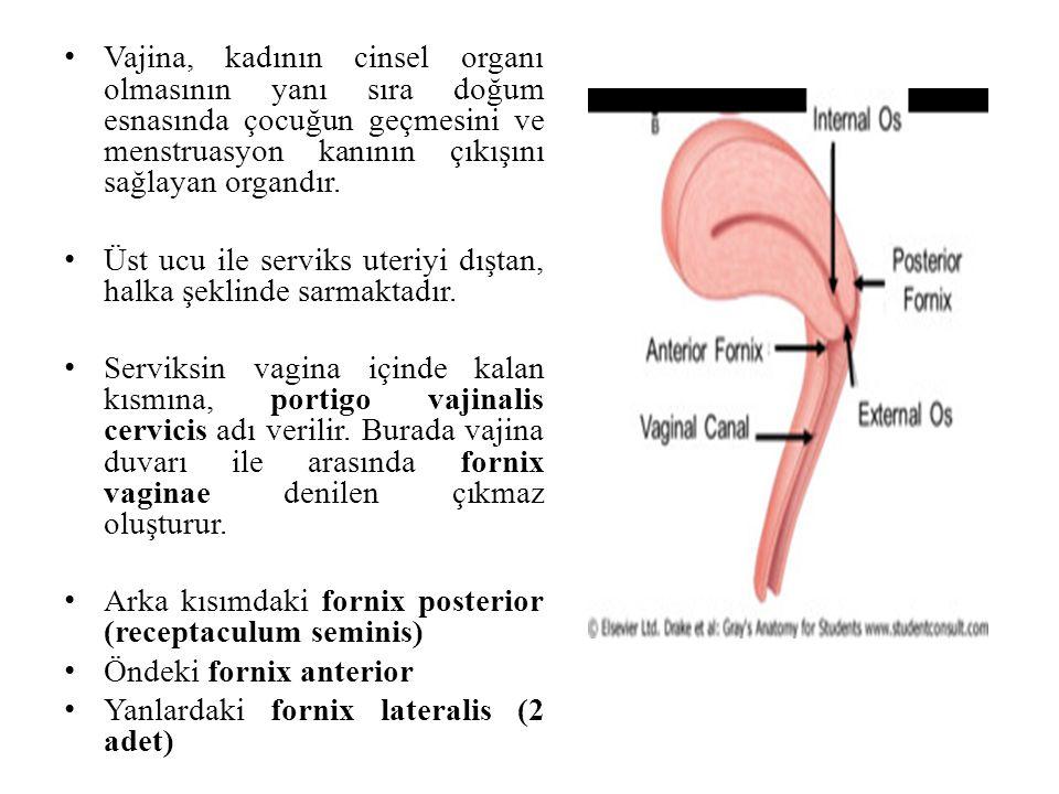Vajina, kadının cinsel organı olmasının yanı sıra doğum esnasında çocuğun geçmesini ve menstruasyon kanının çıkışını sağlayan organdır.