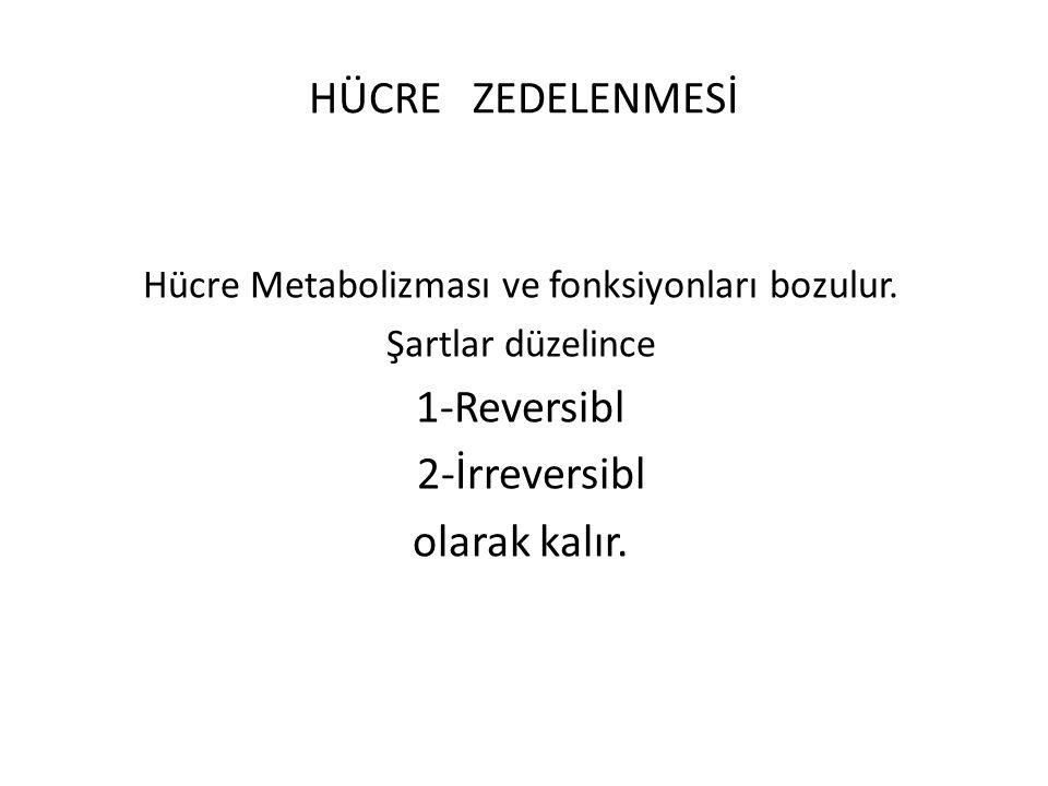 Hücre Metabolizması ve fonksiyonları bozulur.