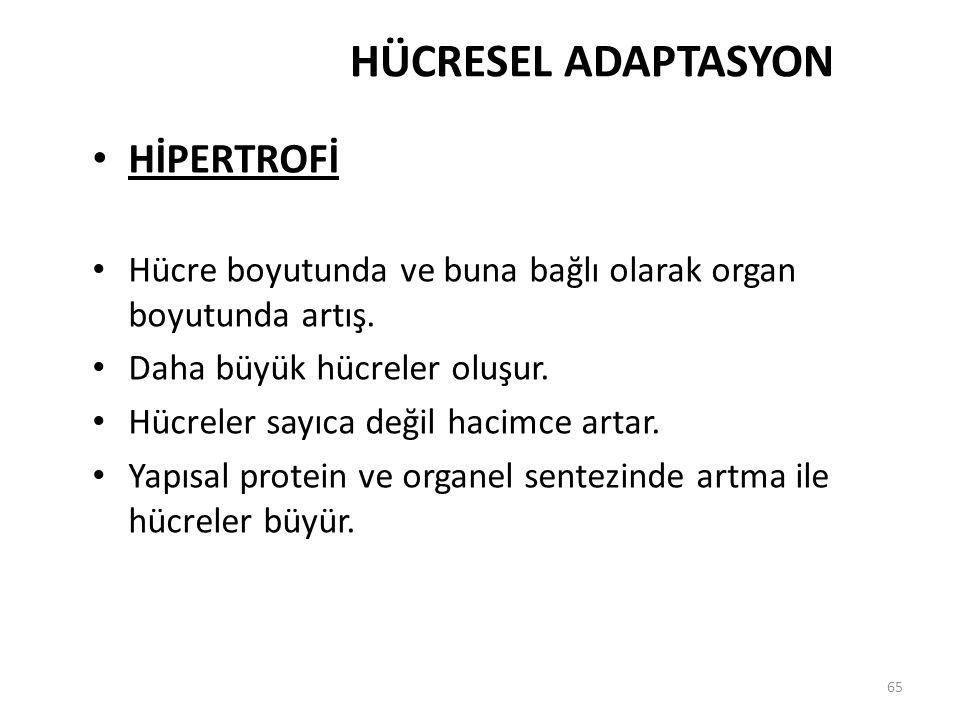 HÜCRESEL ADAPTASYON HİPERTROFİ