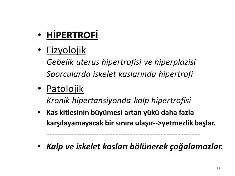 Patolojik Kronik hipertansiyonda kalp hipertrofisi