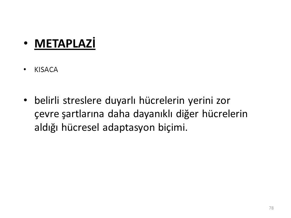 METAPLAZİ KISACA.