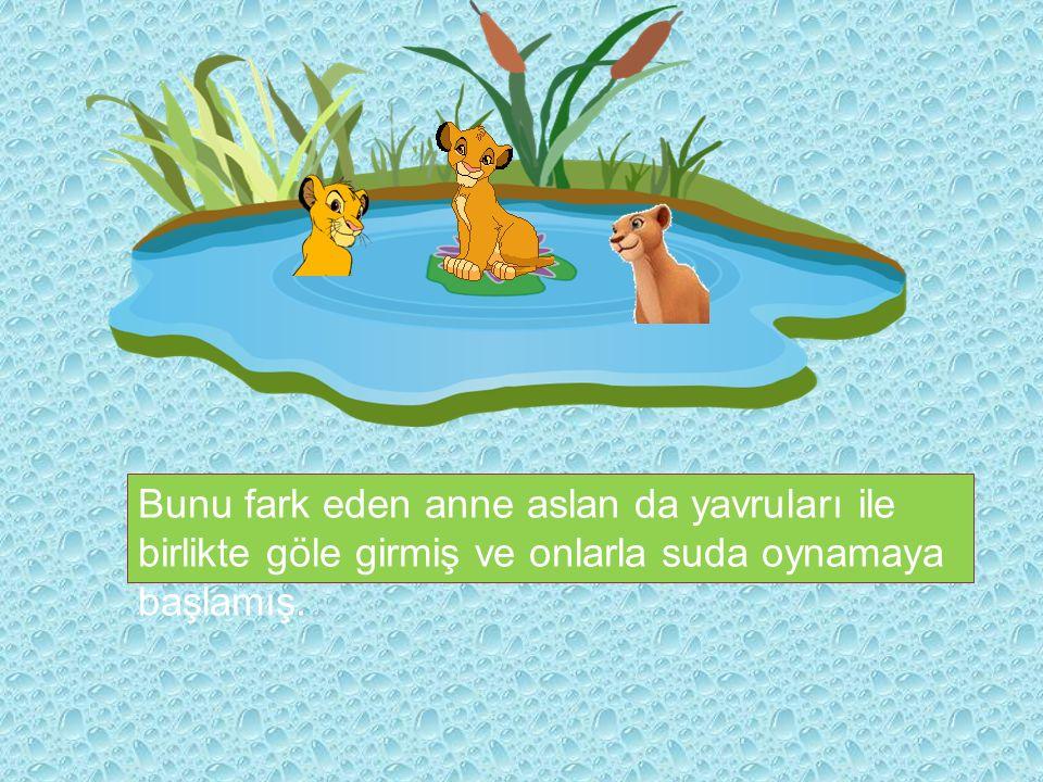 Bunu fark eden anne aslan da yavruları ile birlikte göle girmiş ve onlarla suda oynamaya başlamış.