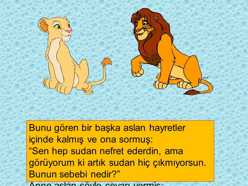 Bunu gören bir başka aslan hayretler içinde kalmış ve ona sormuş: Sen hep sudan nefret ederdin, ama görüyorum ki artık sudan hiç çıkmıyorsun.