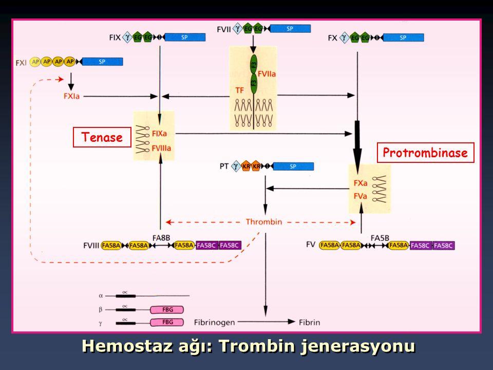 Hemostaz ağı: Trombin jenerasyonu