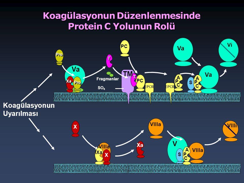 Koagülasyonun Düzenlenmesinde Protein C Yolunun Rolü