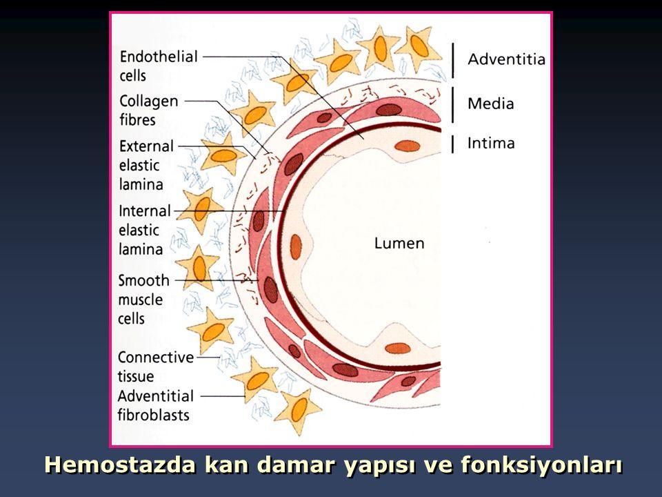 Hemostazda kan damar yapısı ve fonksiyonları