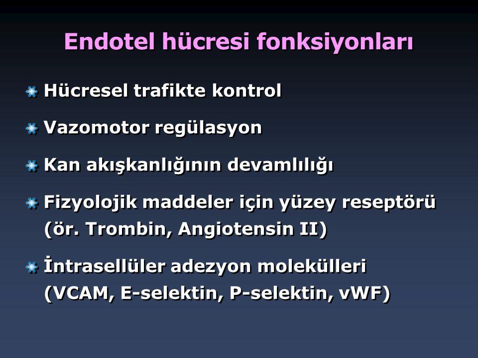 Endotel hücresi fonksiyonları
