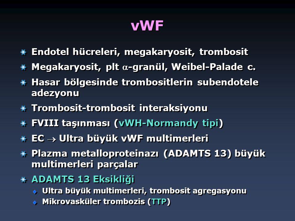 vWF Endotel hücreleri, megakaryosit, trombosit