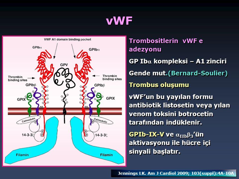 vWF Trombositlerin vWF e adezyonu GP Iba kompleksi – A1 zinciri