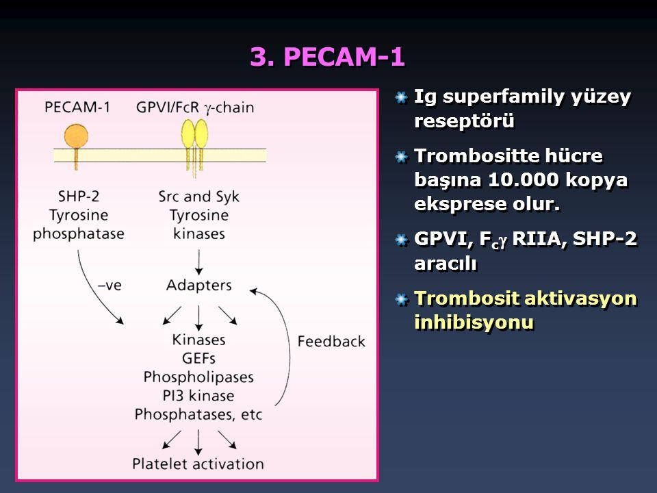 3. PECAM-1 Ig superfamily yüzey reseptörü